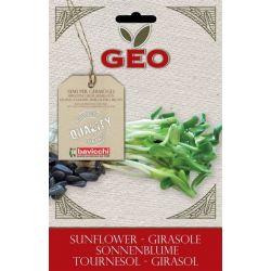Geo - Seminte germinare floarea soarelui bio 80g